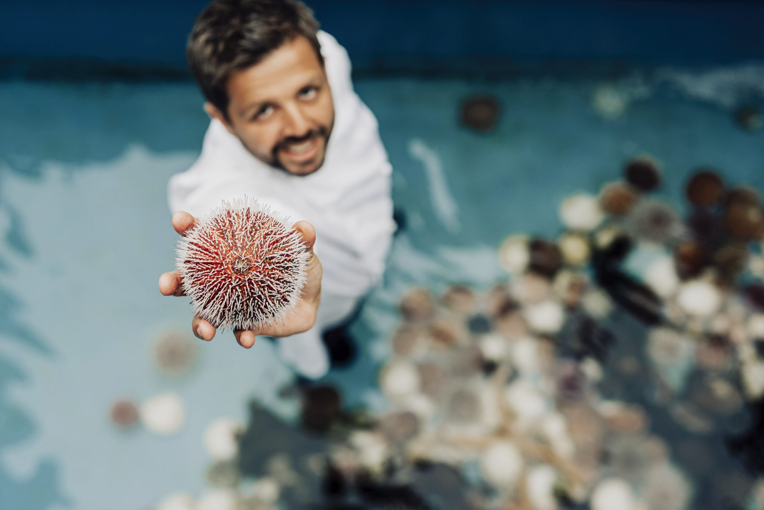 The chef keeps urchin