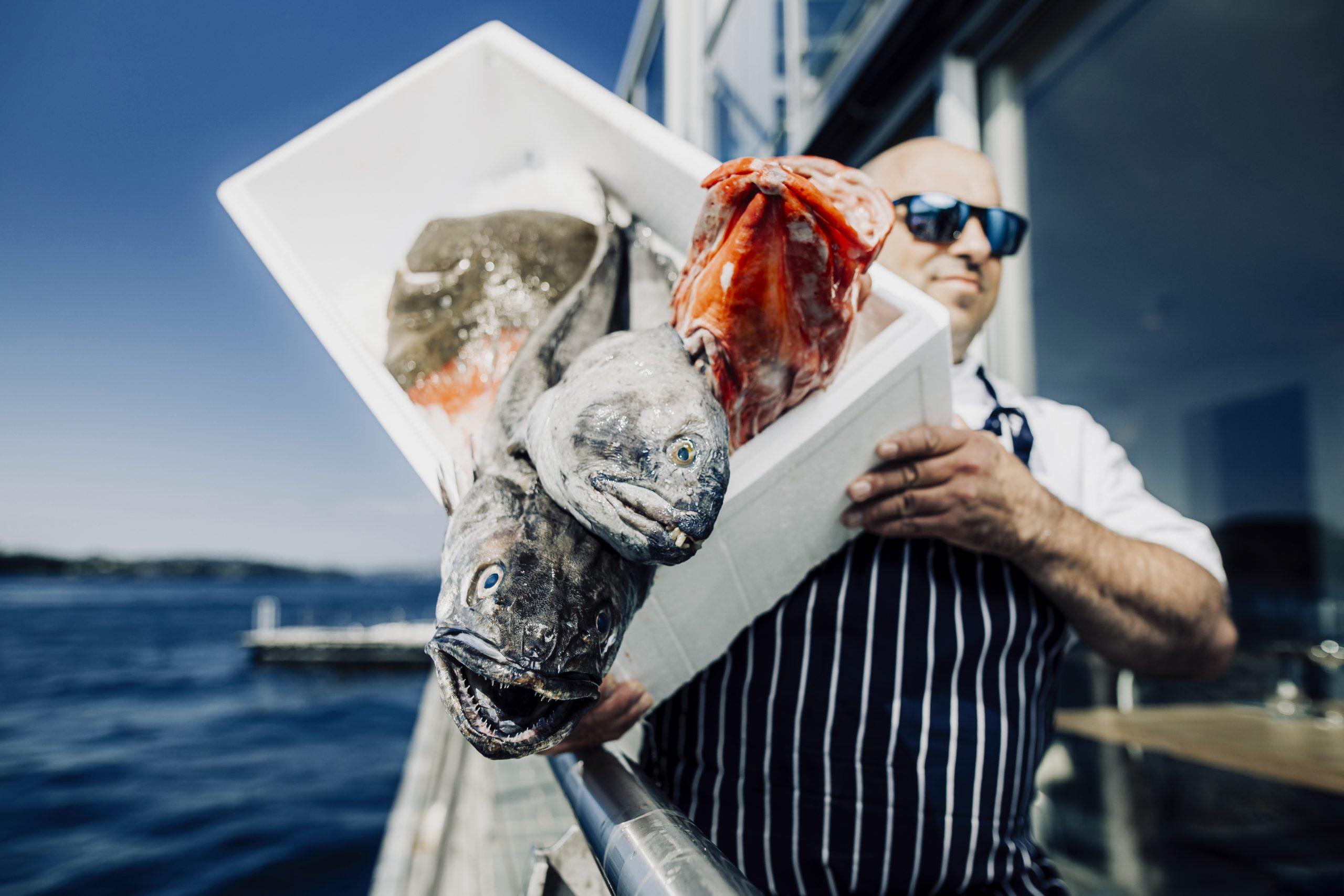 Chef carrying seafood in polystyrene box